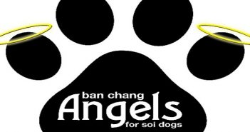 Ban Chang Angels for Soi Dogs