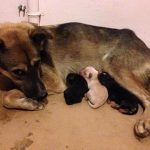 Ban Chang soi dogs and puppies
